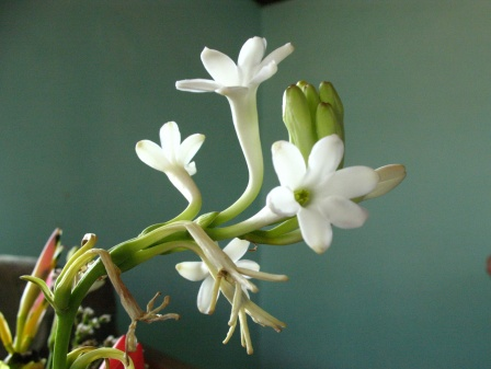 Infos sur les conditions de plantation de ch vrefeuille for Plantation de fleurs