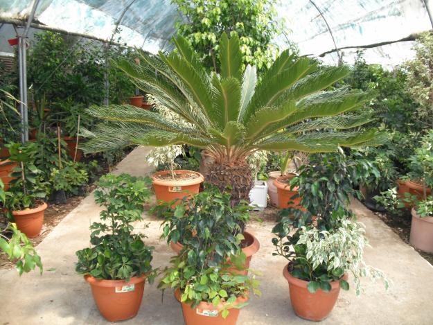 comment choisir les plantes du jardin